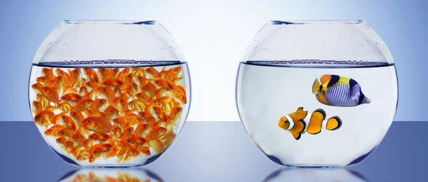 Qual vs Quan fishbowl